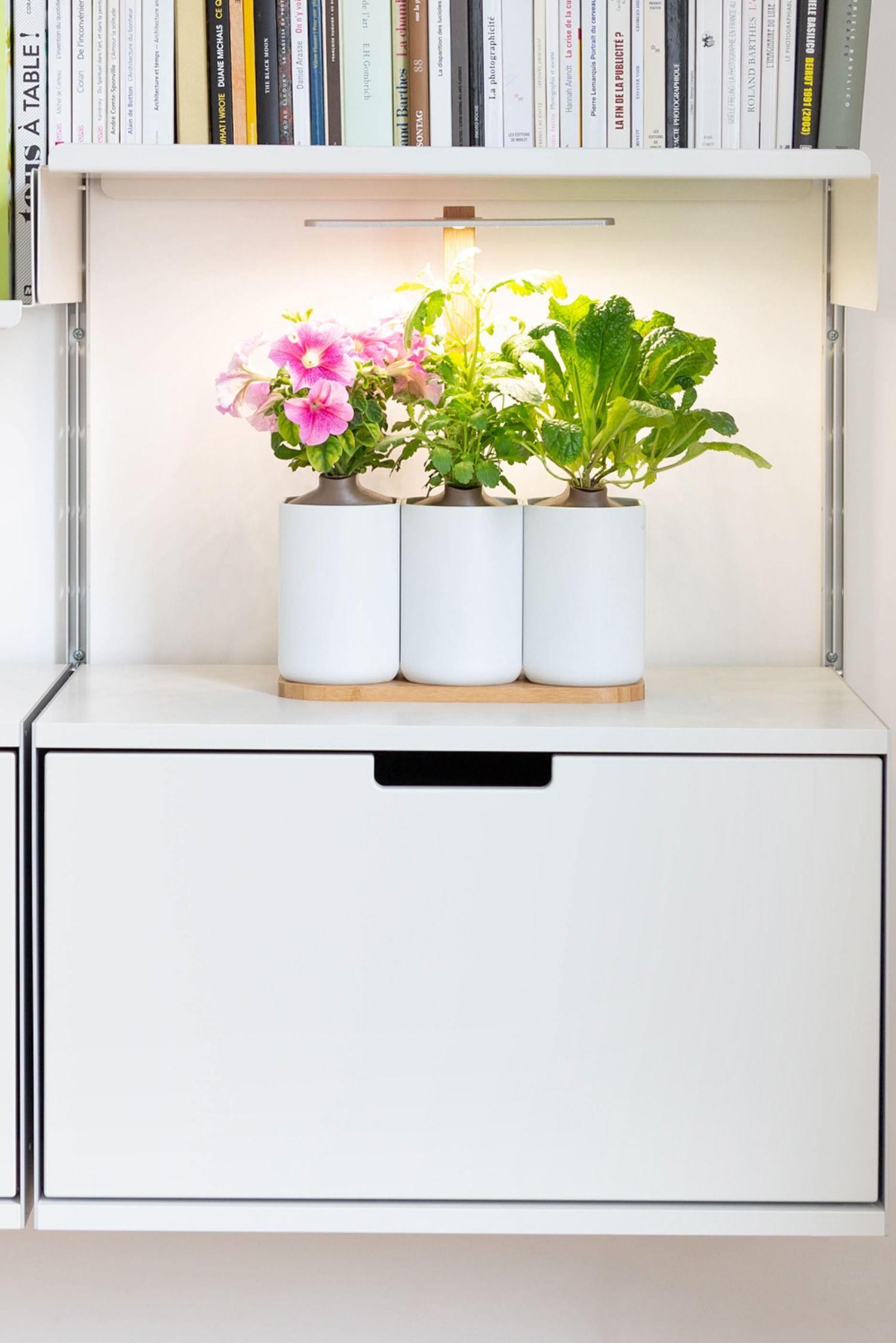 Legumes A Mettre Dans Le Jardin lilo | jardinage de légumes d'intérieur, potager et jardin