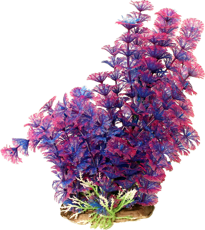 Poppy Pet Bushy Ambulia Aquarium Plant Purple 12 Inch
