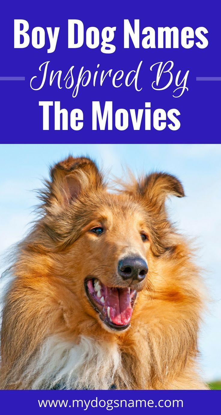 Names boy dog dog and pet life