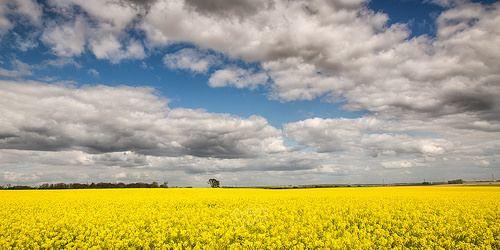 L'éphémère jaune photo by CrËOS Photographie