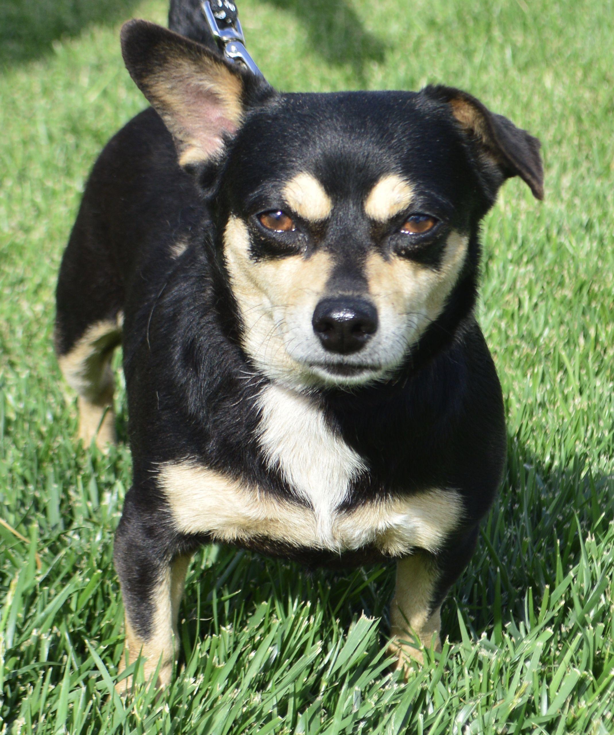 Bo Dach Dog For Adoption In Palo Alto Ca Adn 529104 On Puppyfinder Com Gender Female Age Adult Dog Adoption