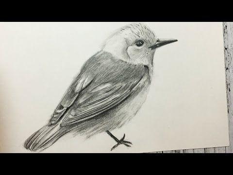 Como Dibujar Un Pajaro Realista Paso A Paso Facil Y Rapido How To Draw A Bird Step By Step Youtube Dibujos De Pajaro Como Dibujar Aves Pajarito Dibujo