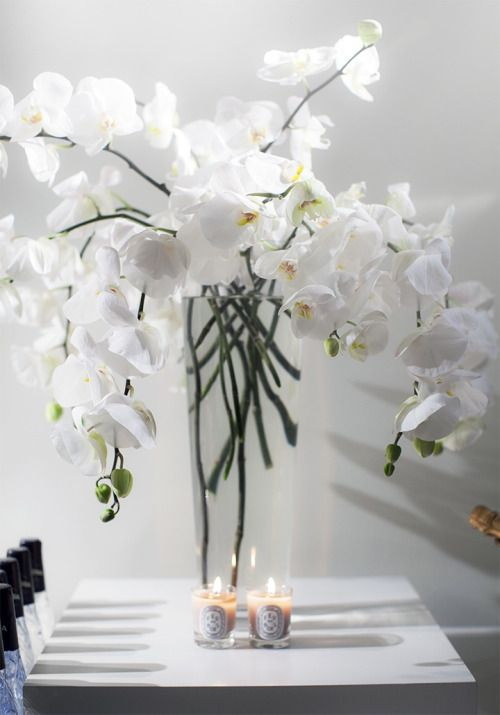 Little Parts Of Me White Orchids White Flowers Flower Arrangements