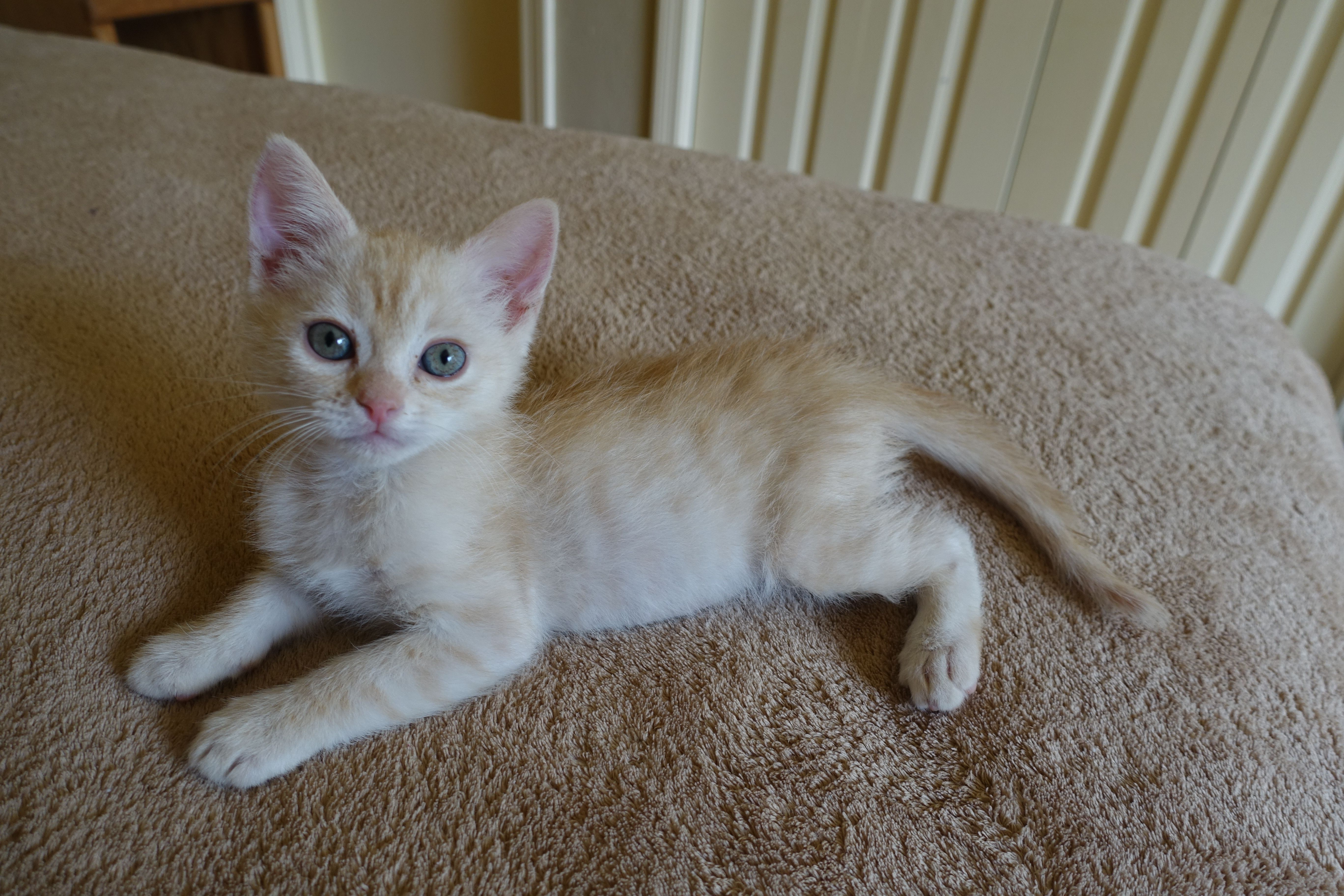 Cookie Is The Biggest Kitten I Ve Ever Fostered Six Weeks Old And Almost Two Pounds Http Ift Tt 2qkklwk Cute Cats And Kittens Pretty Cats Crazy Cats