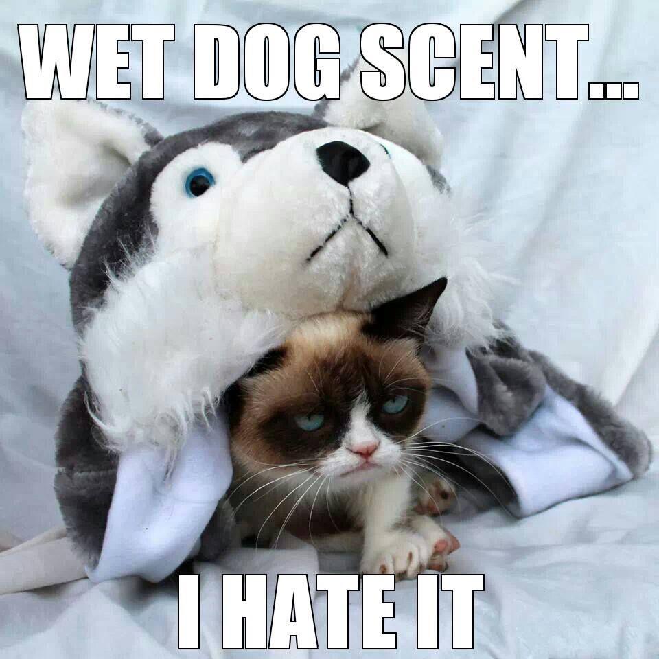 Grumpy Cat meme GrumpyCat random Grumpy cat humor