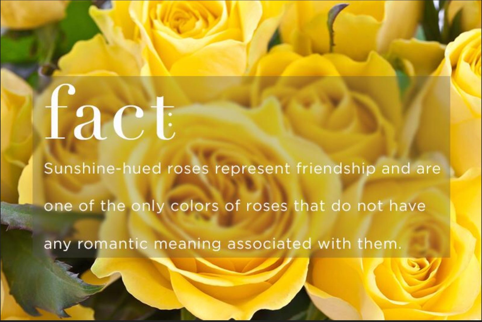 Pin by Katelyn Nichols on Flowers Rose meaning