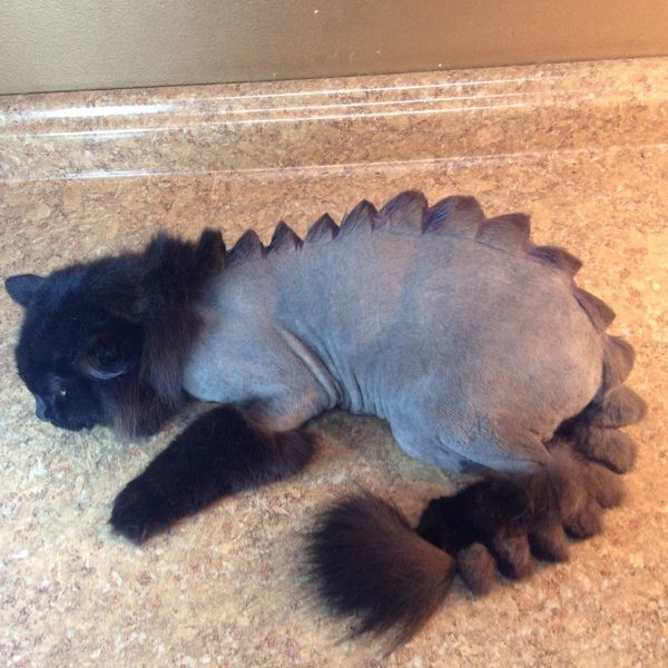Cat Groomed Like Dinosaur