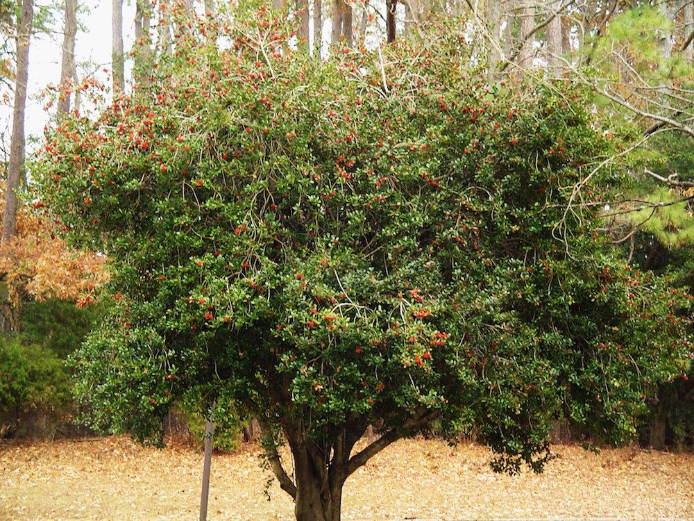 The best trees for any backyard by Dogwood Landscaping