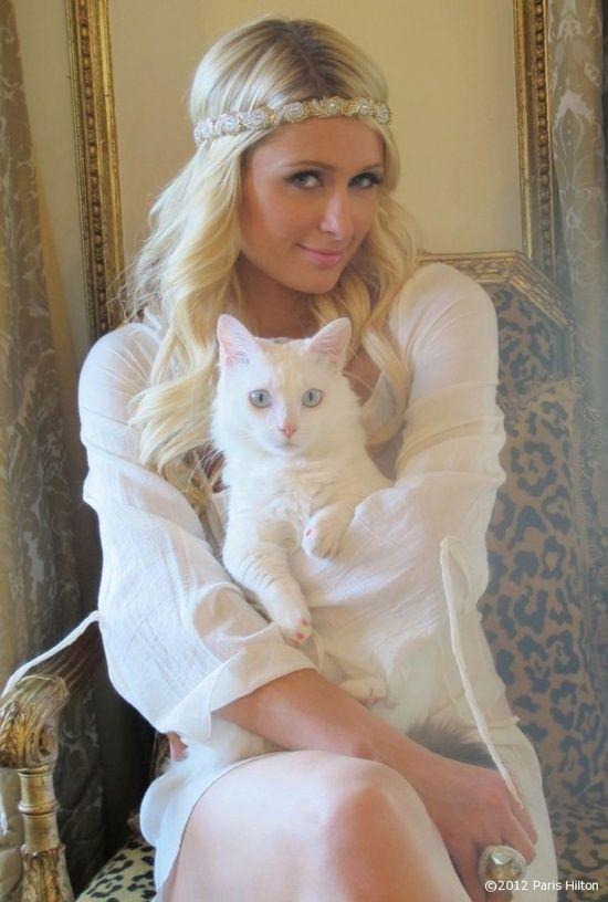 Paris Hilton Cat