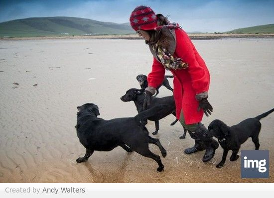 Ettrick Bay with the dogs, winter 2012/13