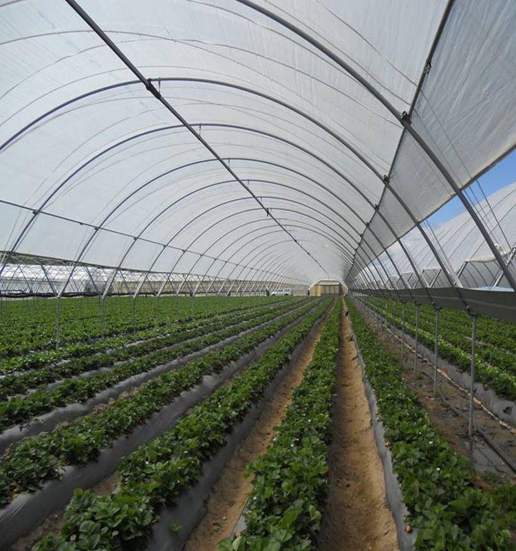 rain proof shade net greenhouse | Greenhouse, Shades
