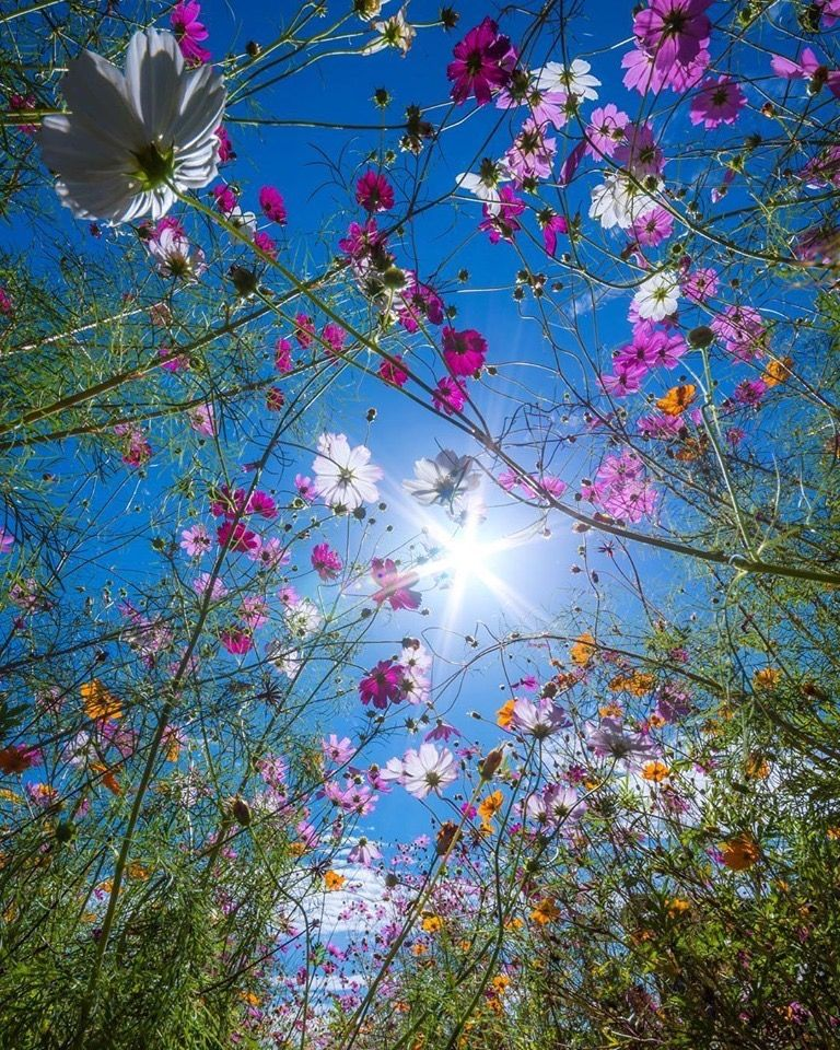 Beautiful Meadow Kumamoto Japan Ig Ig Kenken 728