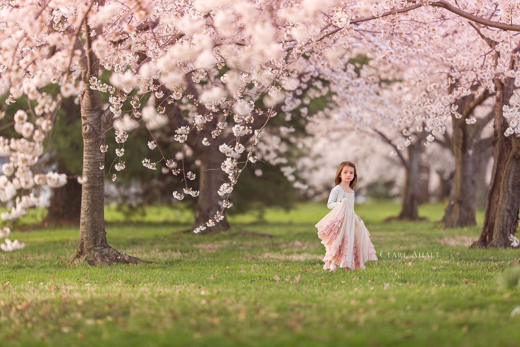 Cherry Blossoms Spring Pictures Cherry Blossom Pictures Spring Photography