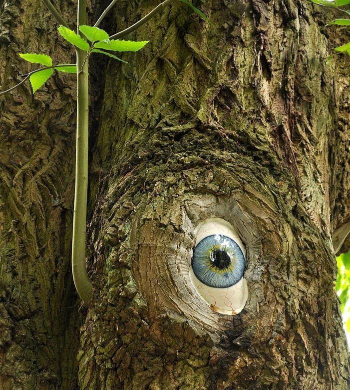 kunst in de natuur - Bing Afbeeldingen
