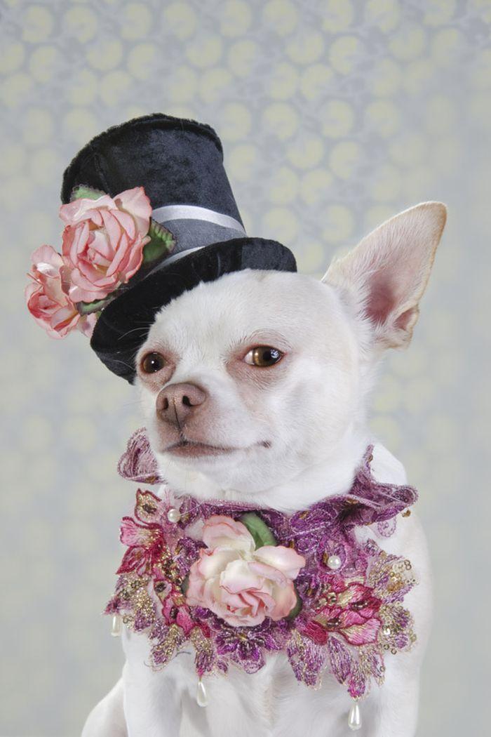 Картинки собаки немецкий ягдтерьер сама мама
