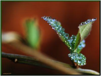 Rosée du matin -  - Photo macro de gouttes d'eau