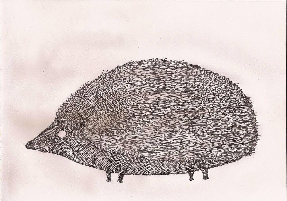 porco-espinho / hedgehog (2014)