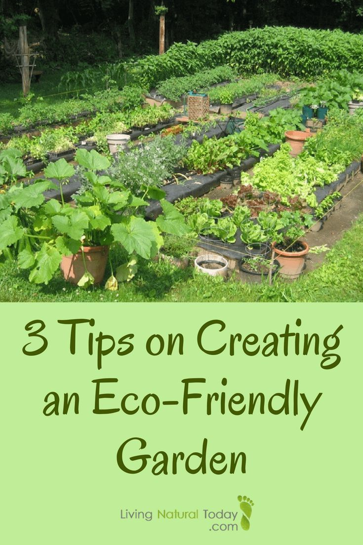 3 Tips on Creating an Eco-Friendly Garden | Gardens, Garden ideas ...