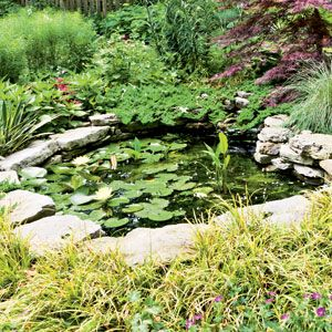 17 Best images about Native Garden Pond on Pinterest Gardens