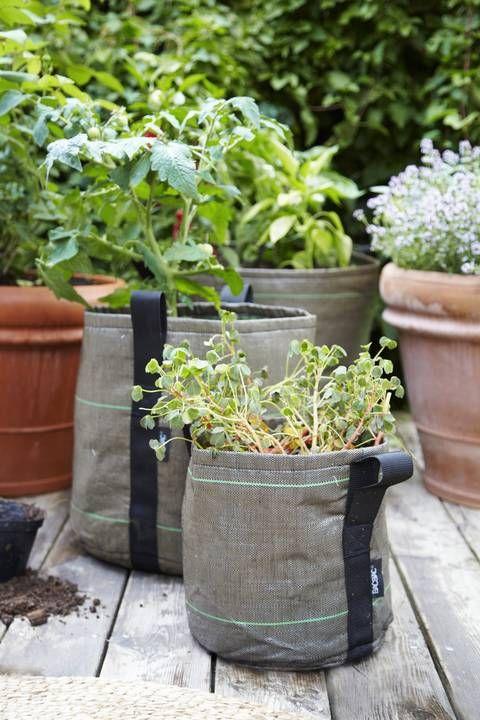 Tomates Et Plantes Aromatiques Sur Votre Terrasse Avec Les Pots De
