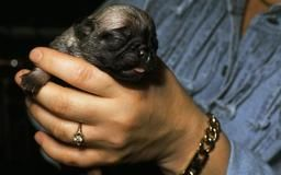 How To Take Care Of An Orphaned 3 Week Old Puppy Dog Care The