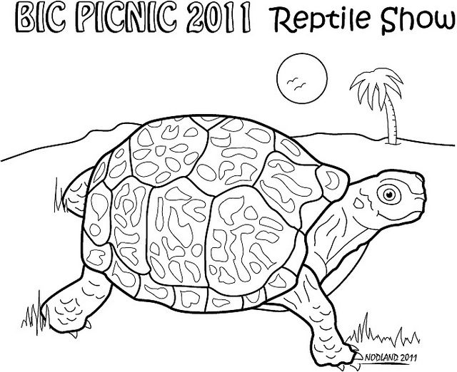 Eastern Box Turtle Turtle Sketch Turtle Coloring Pages Turtle Art