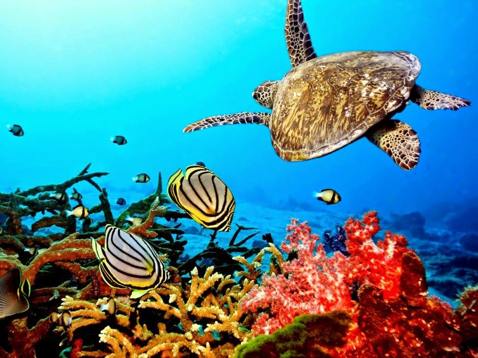 Las Mejores Fotografías Del Mundo Los Arrecifes De Coral Arrecifes De Coral Animales Bajo El Agua Arrecife De Coral