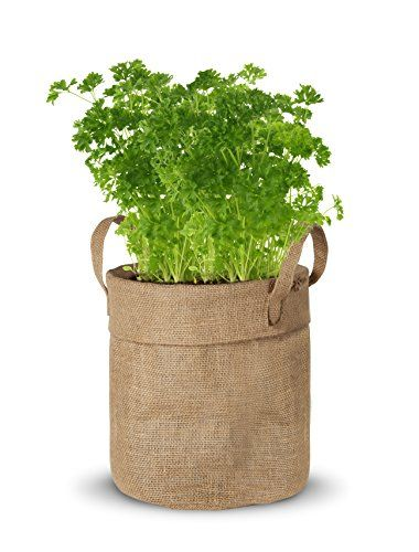 nice kit de cultivo maceta yute de perejil bio ( semillas