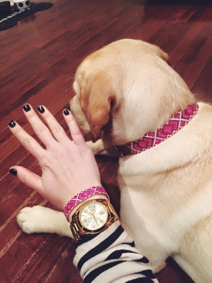 The Pedigree Princess Friendship Collar Dog Toys Dogs