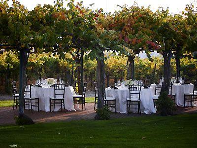Livermore Wedding Venues   Concannon Vineyard Wedding Location Livermore Wedding Venue Tri