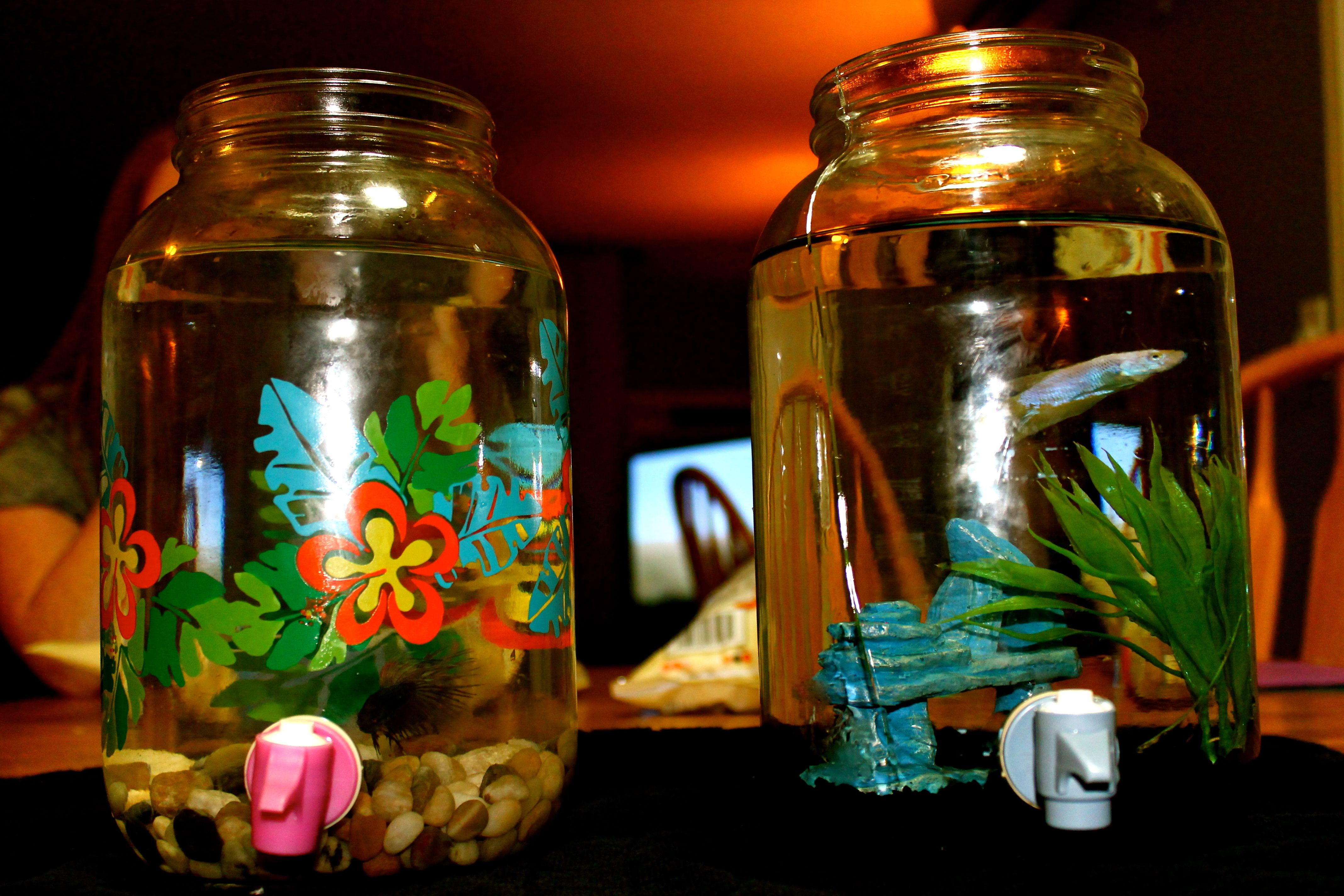 Make a fish tank using a water dispenser from goodwill for How to clean a betta fish bowl