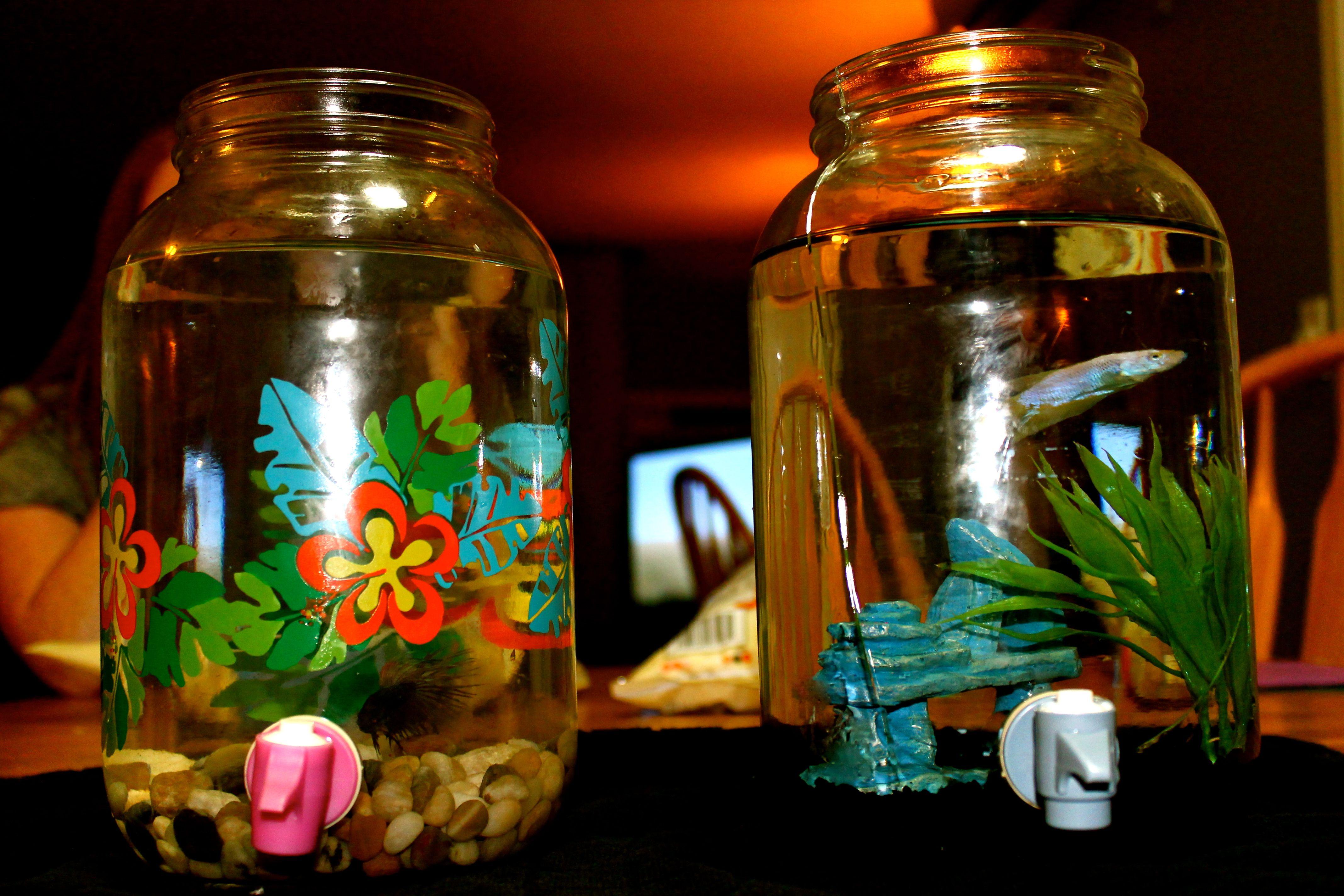 Make a fish tank using a water dispenser from goodwill for Cheap betta fish