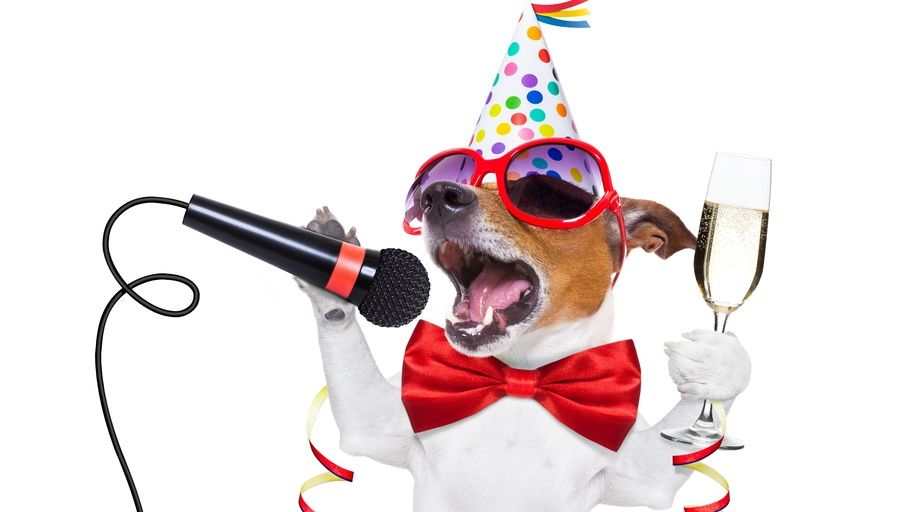 Funny Glasses Party Party Dog New Year Happy New Year Holiday Celebration Happy 2018 Funny New Year Glasse Funny New Year New Year Holidays Animal Wallpaper
