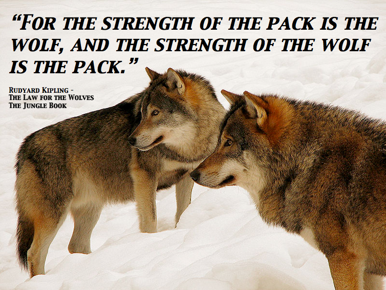 Wolf Quotes About Strength: For The Strength Of The Pack Is The Wolf, And The Strength