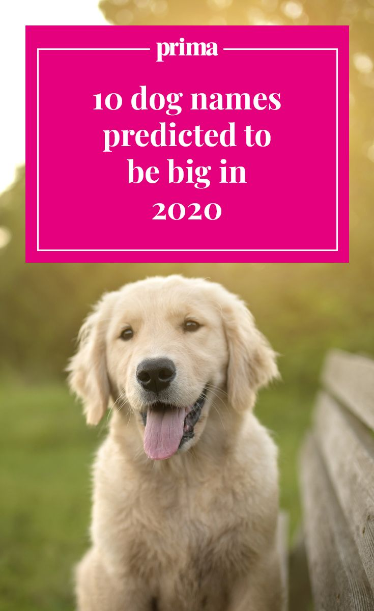 10 dog names predicted to be the most popular in 2020
