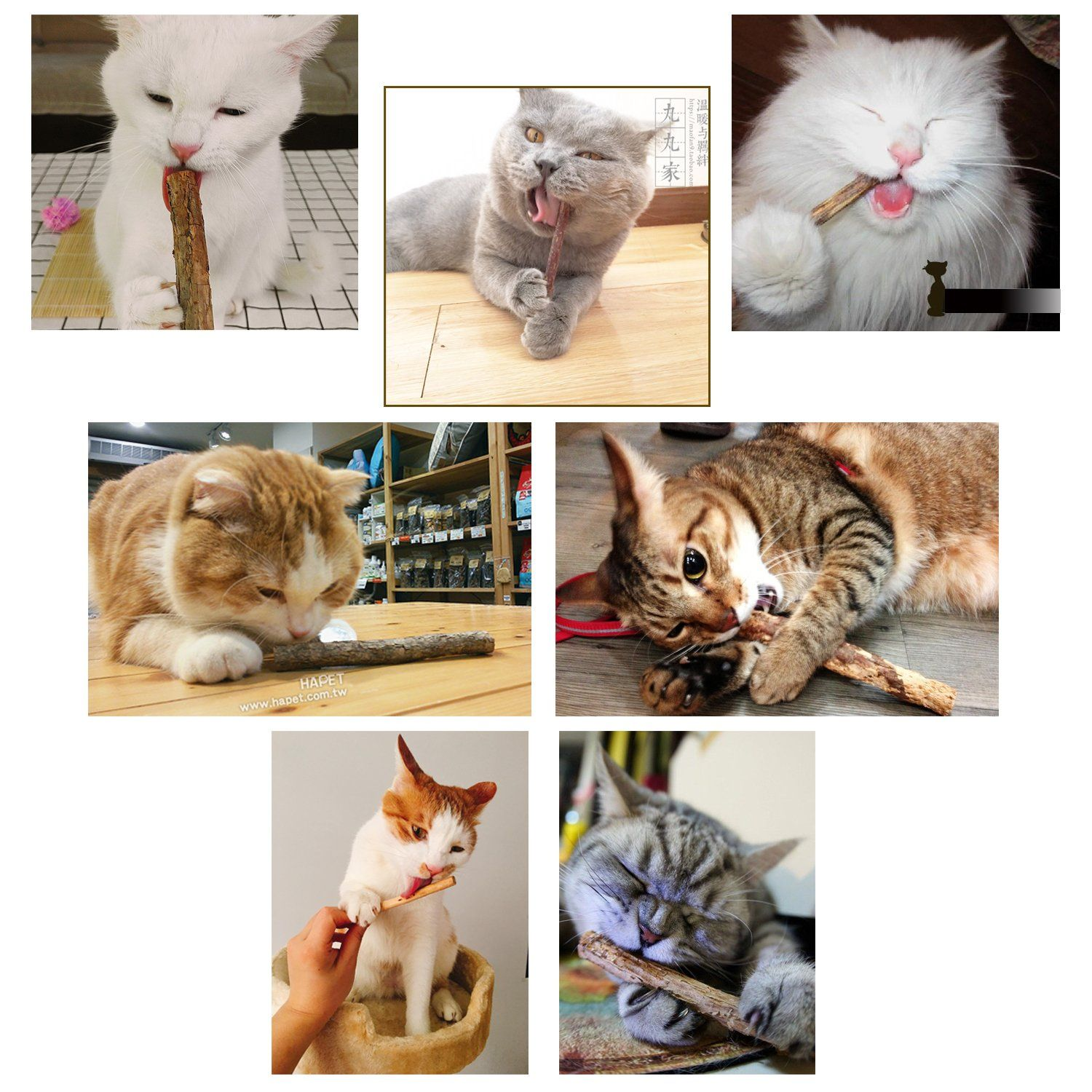 Adorable Pets Cat Catnip Sticks 6 Pack Natural Matatabi Teeth Grinding Chew Toy Healthy Care Organic Silvervine Dental Cat Toys Cute Animals Cats And Kittens