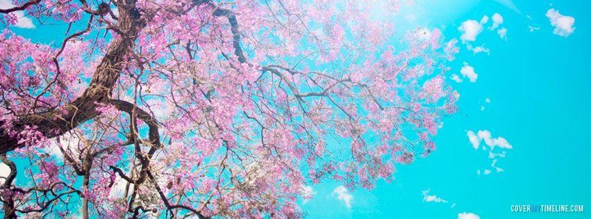 Spring Cherry Blossom Tree Free Facebook Covers Facebook Facebook Cover Design Background Facebook Cover Facebook Cover Images