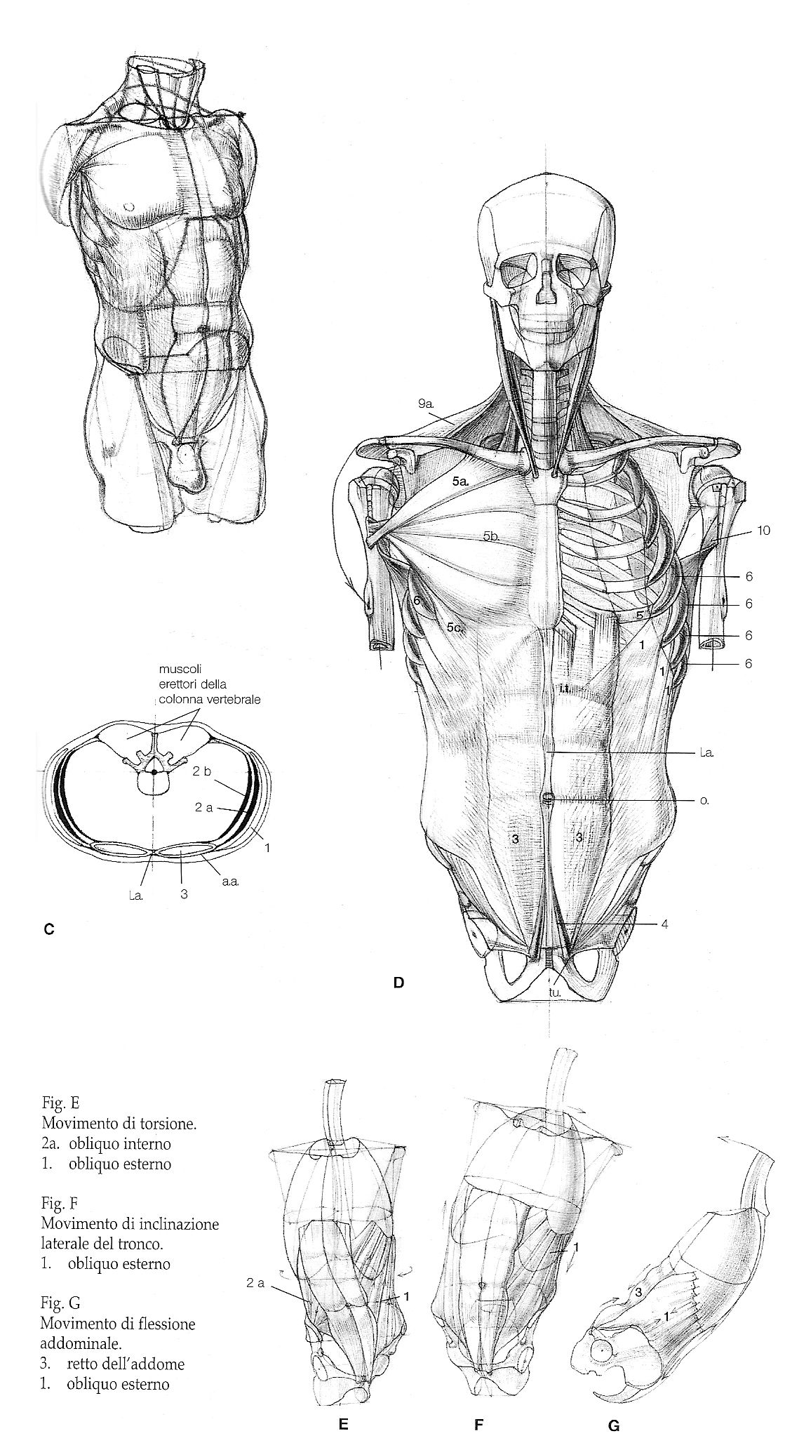 ANATOMY TUTORIAL | Animation + Technics | Tips | Pinterest ...