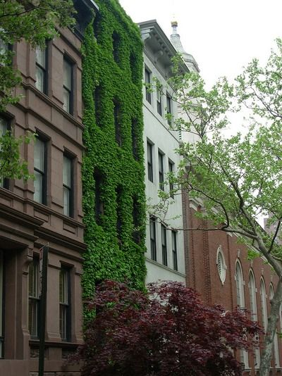 10 Ivy Covered Houses