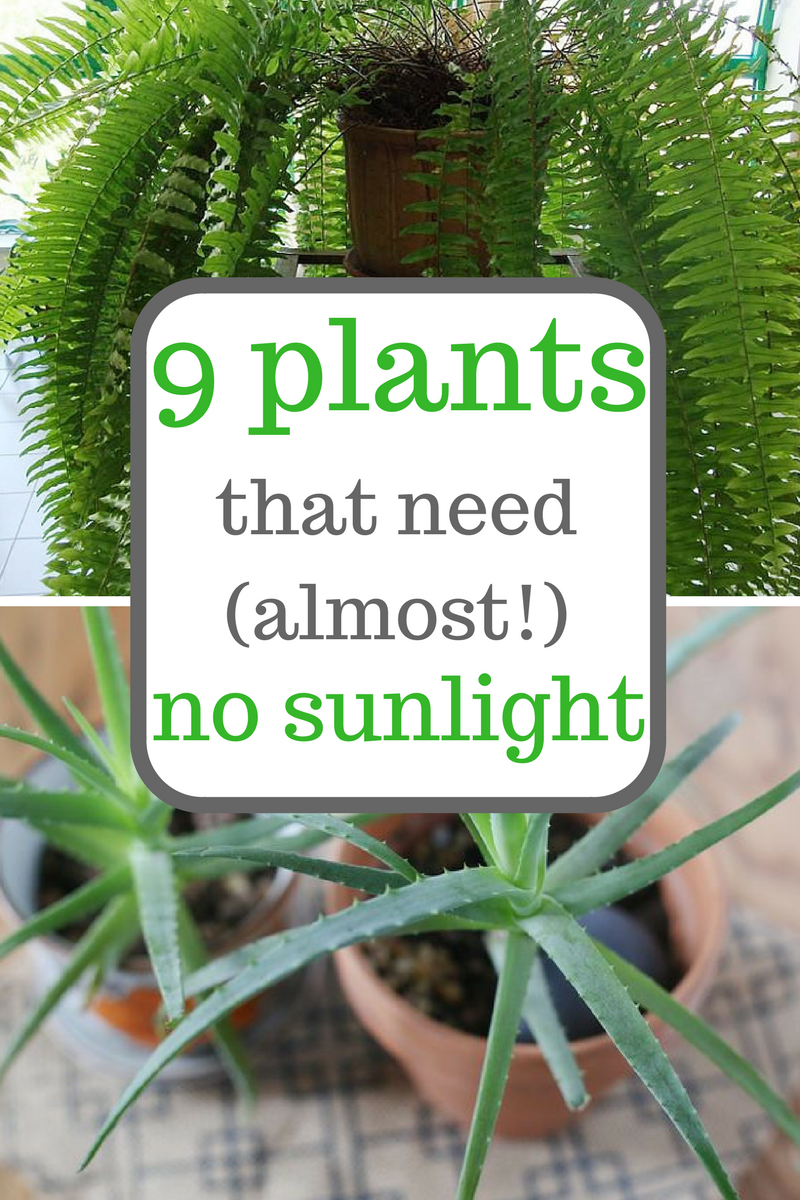 inside plants that don't need sun - 736×1104