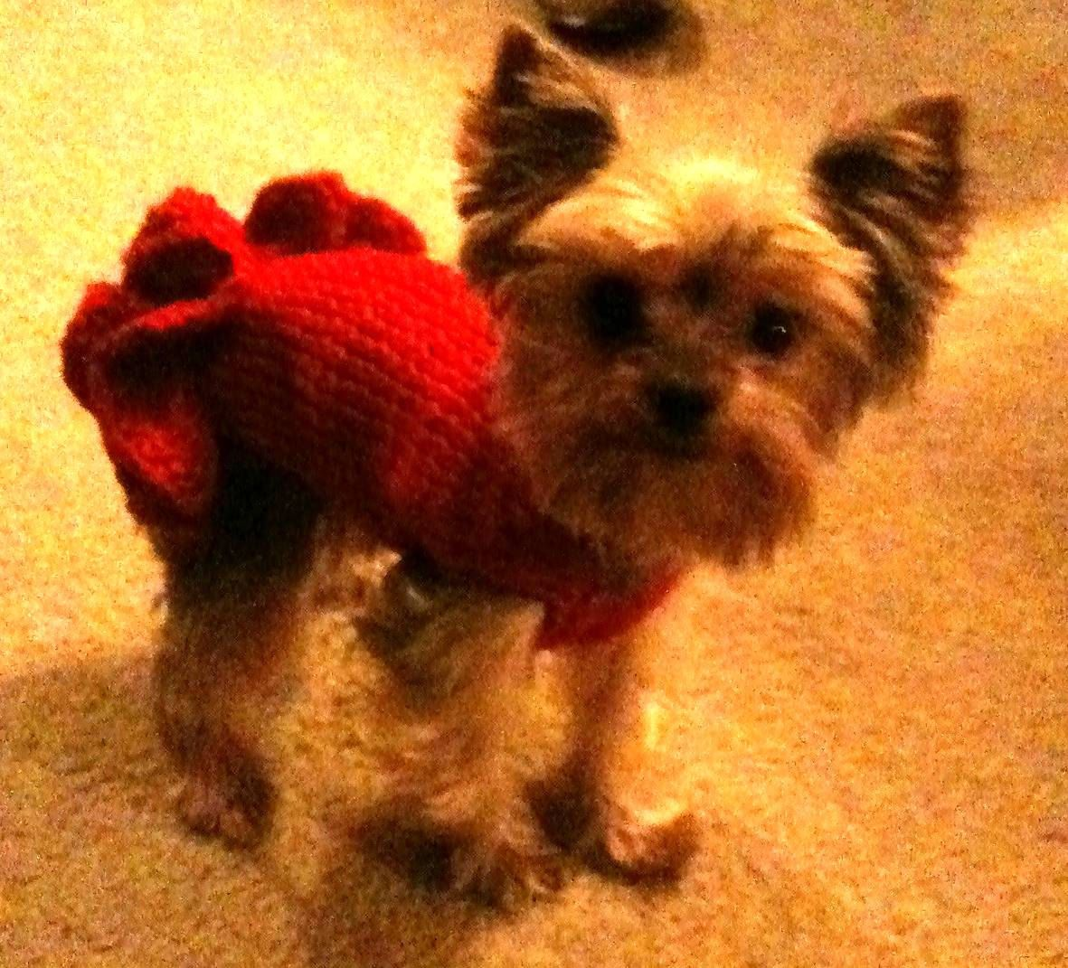Pdf Download Knit Pattern For Sofies Tiny Dog Knit Party Dress