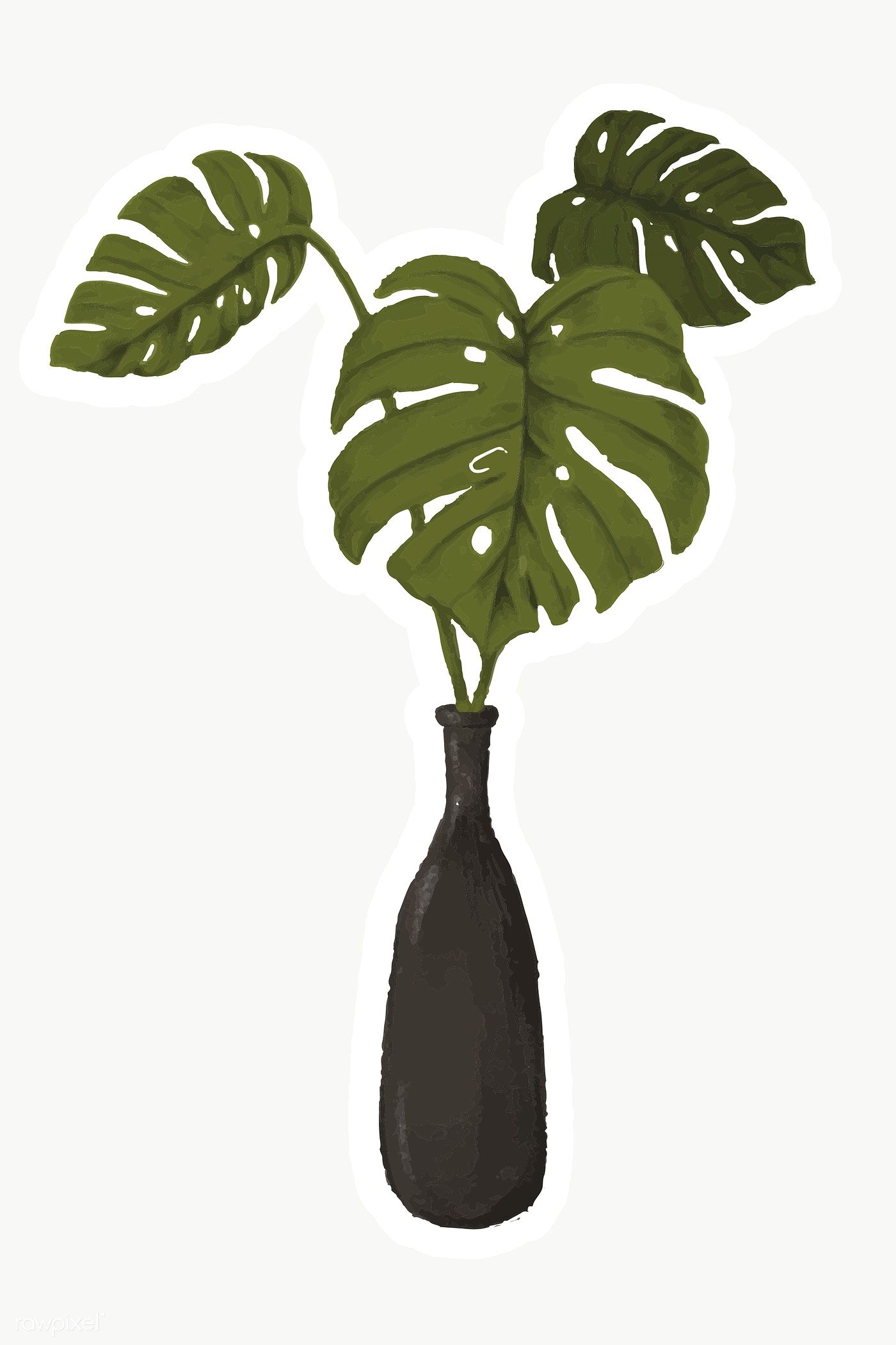 Swiss Cheese Plant In A Vase Sticker Premium Image By Rawpixel Com Noon Plant Illustration Swiss Cheese Plant Philodendron Plant