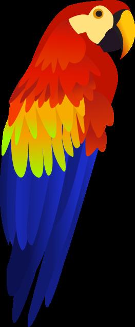 Download Png Image Colorful Parrot Png Images Free Download Desenho De Arara Desenho De Natal Garrafas Pintadas