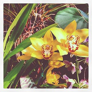 #orchids #greenhouse #aquarium #zoo #chattanooga #tennessee #garden #botanicalgarden #flowers