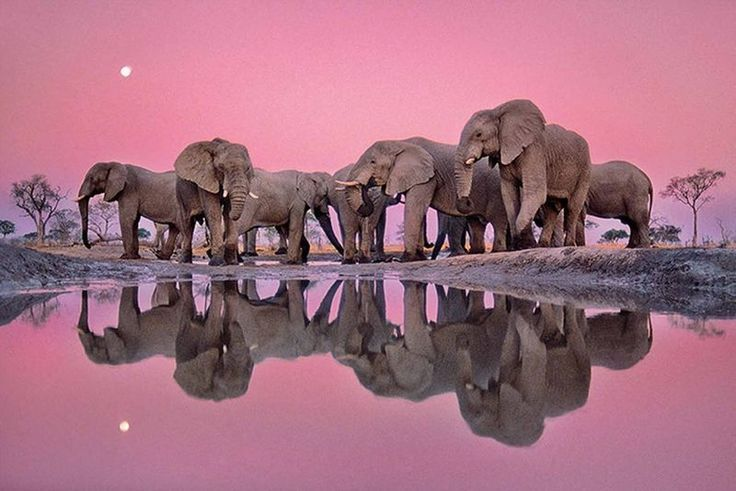 Elephants          #perspicacityparty