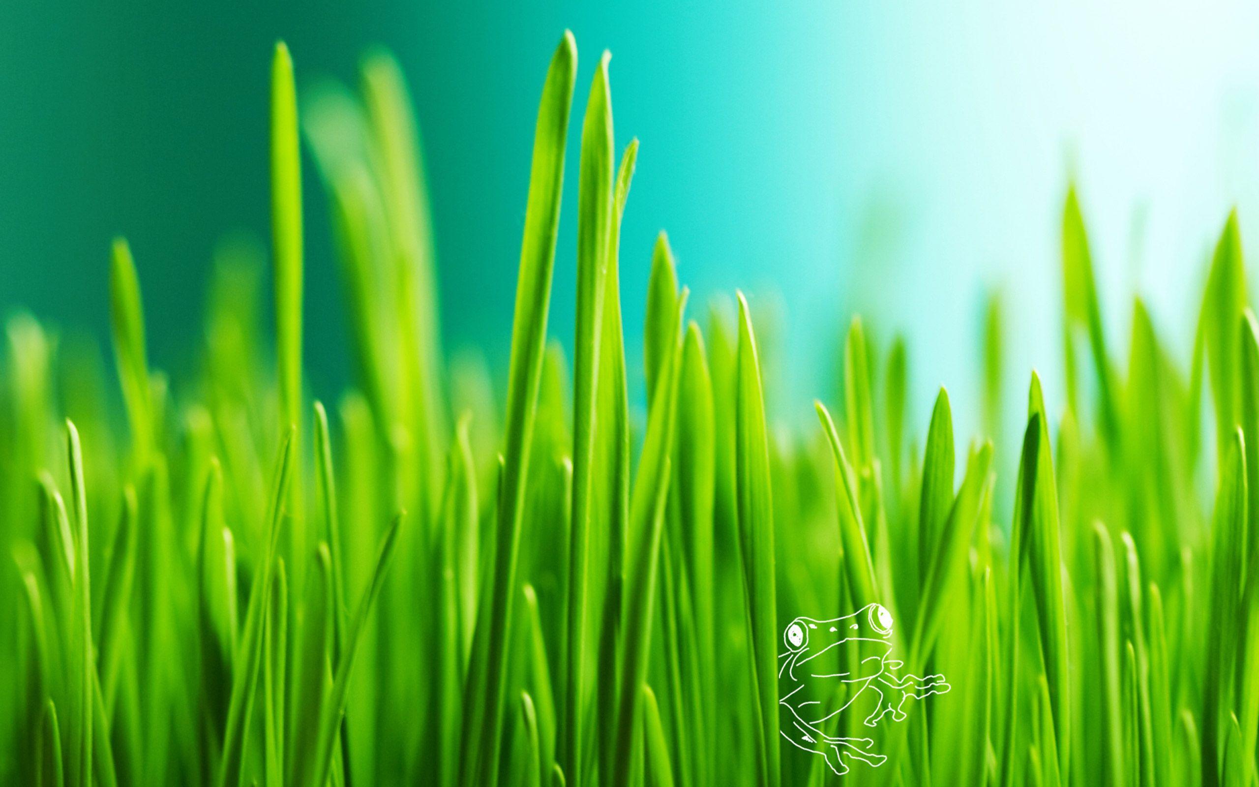 Green Grass Background Cool Wallpaper