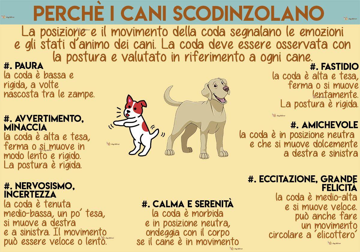 La Comunicazione Dei Cani La Coda Che Scodinzola Cani