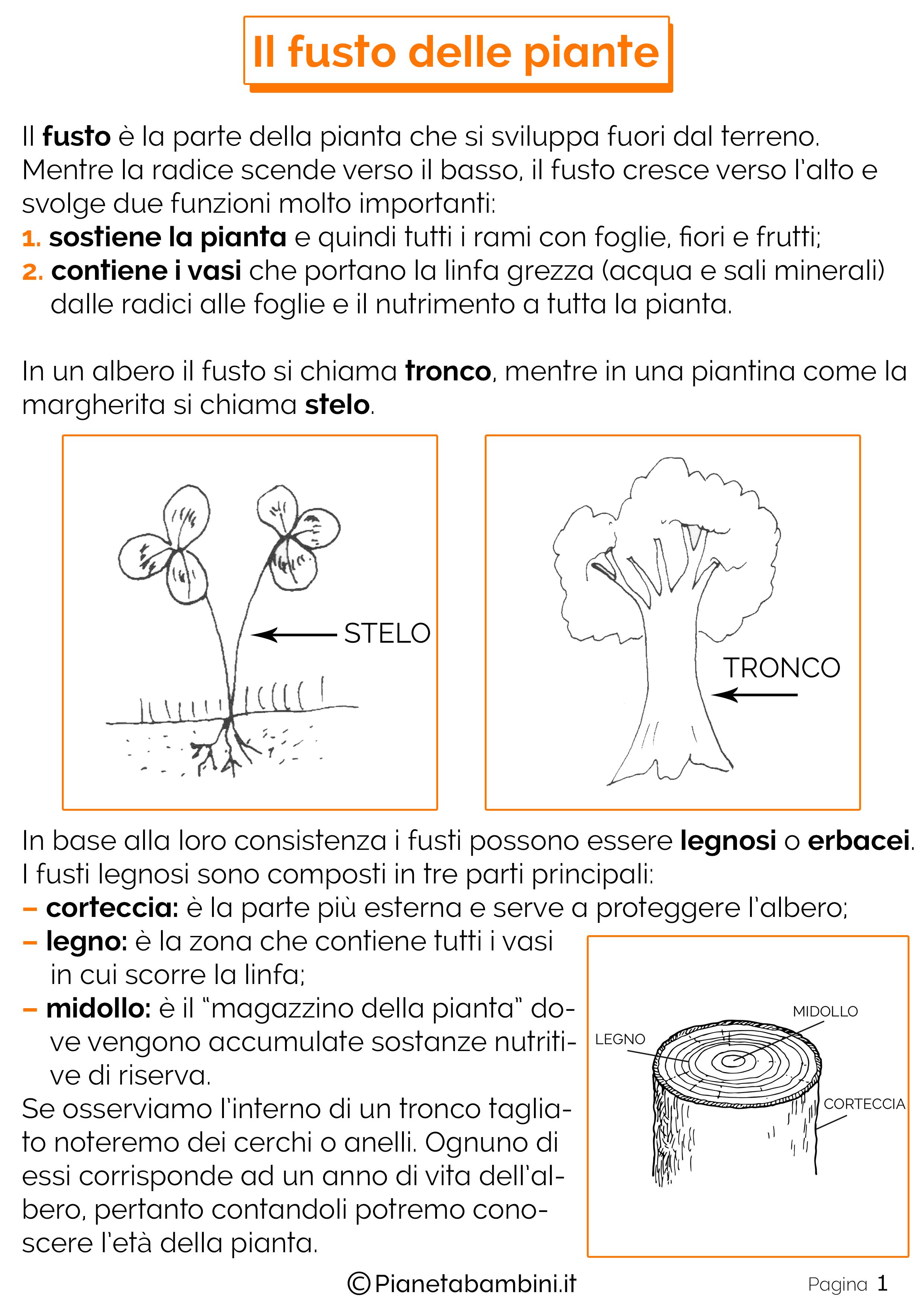 Il Fusto Delle Piante Schede Didattiche Per La Scuola Primaria Pianetabambini It Scienza Per Bambini Scuola Schede Didattiche