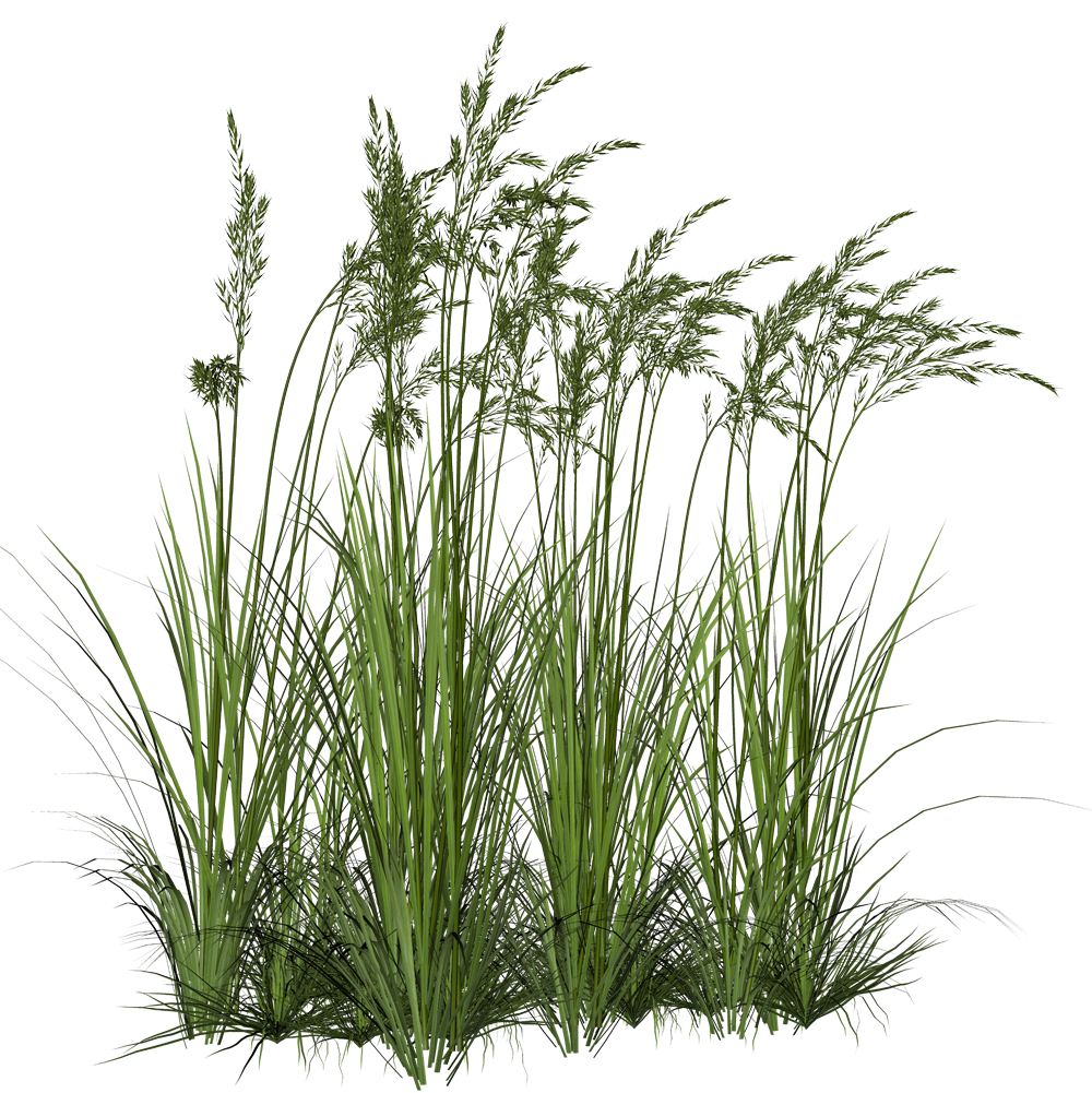 Render nature renders herbe for rendering pinterest Long grass plants