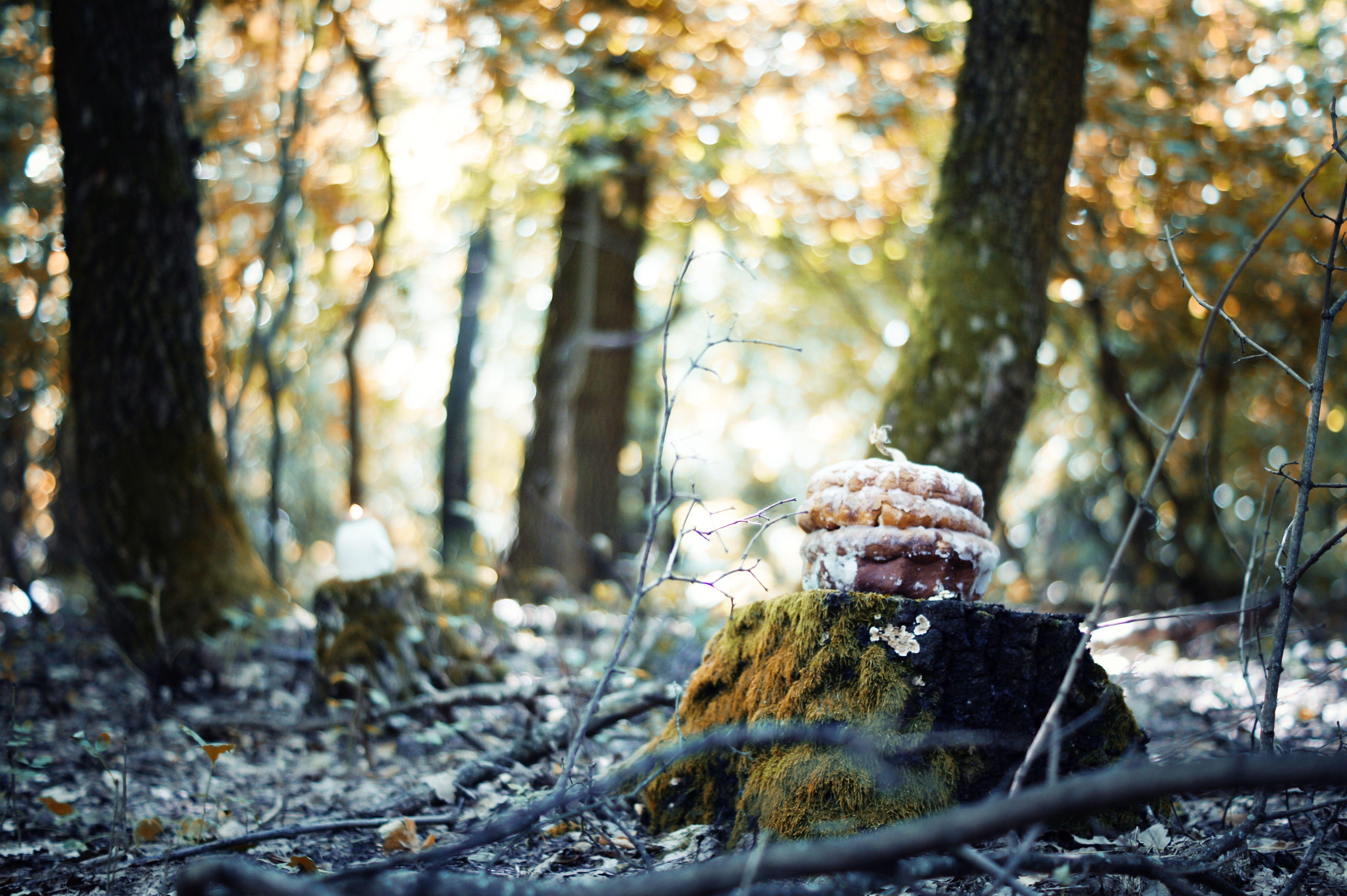 Pumpkin bundt cake.   Fall in love with this cute halloween cake  Photo byt Alexander Jančo